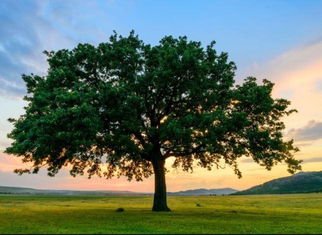 Różnorodność biologiczna – drzewo