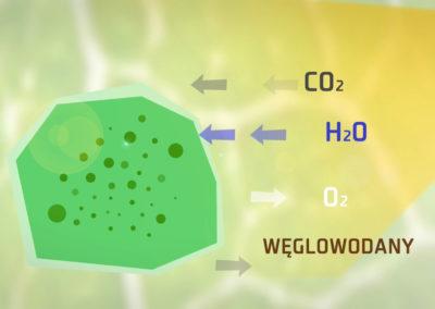 Czysta energia - Biomasa